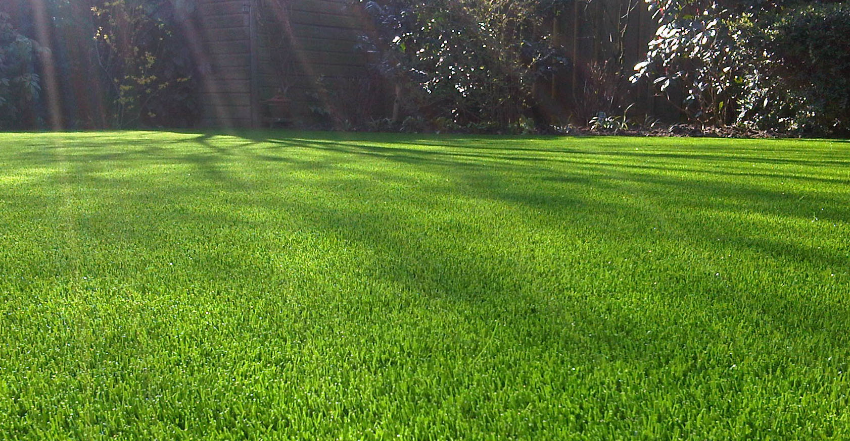 Want a beautiful lawn this summer dick and karla for Tipos de cesped natural para jardin