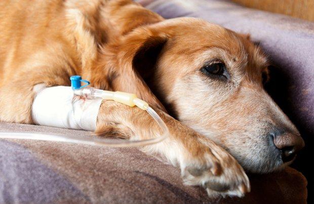 Home Pet Medicine