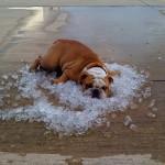 Dog, Pet, Summer, Cool Down