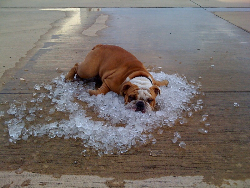 Dog, Pet, Summer, Cool Down