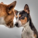 Pet, Homes, Pet Community, Tampa Bay