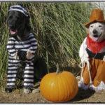 Halloween Home Pets Florida